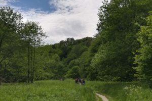 Dolinki Krakowskie - miejsce na spacer
